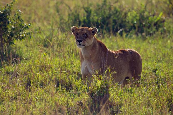 Foto Reisen Masai Mara, Kenia mit Uwe Skrzypczak www.serengeti-wildlife.com