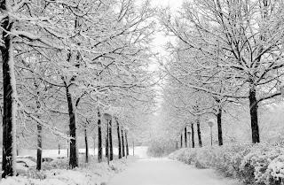 Mùa đông đã về phố