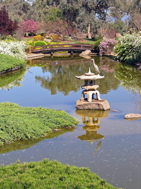 lago no jardim japonês