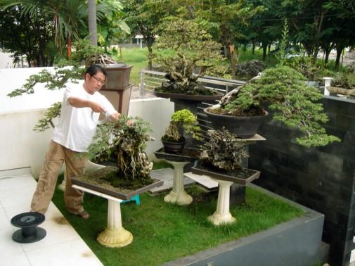garden design bonsai