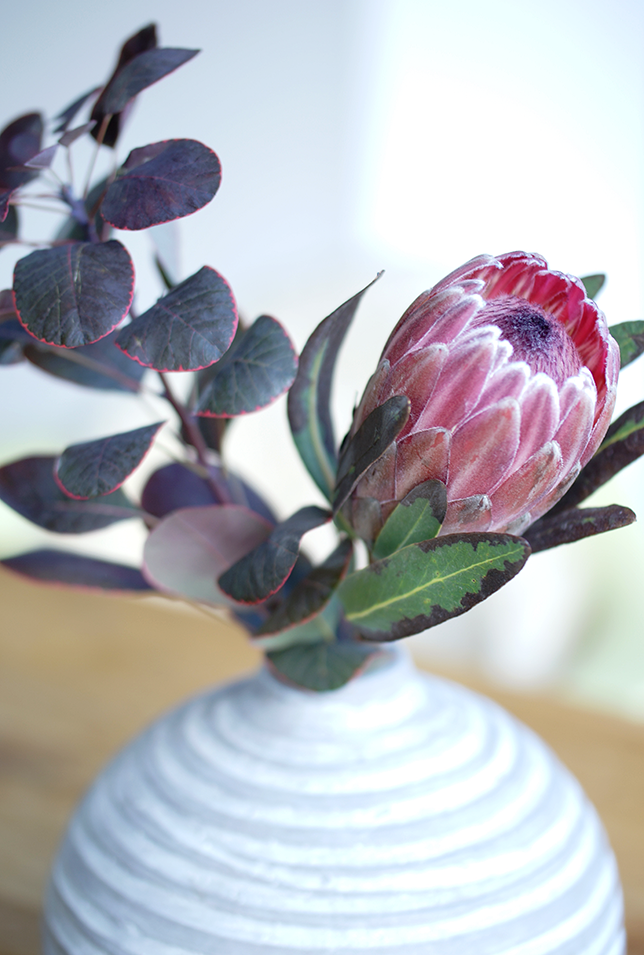 Ynas Design Blog | Flower Friday | Protea in der Vase