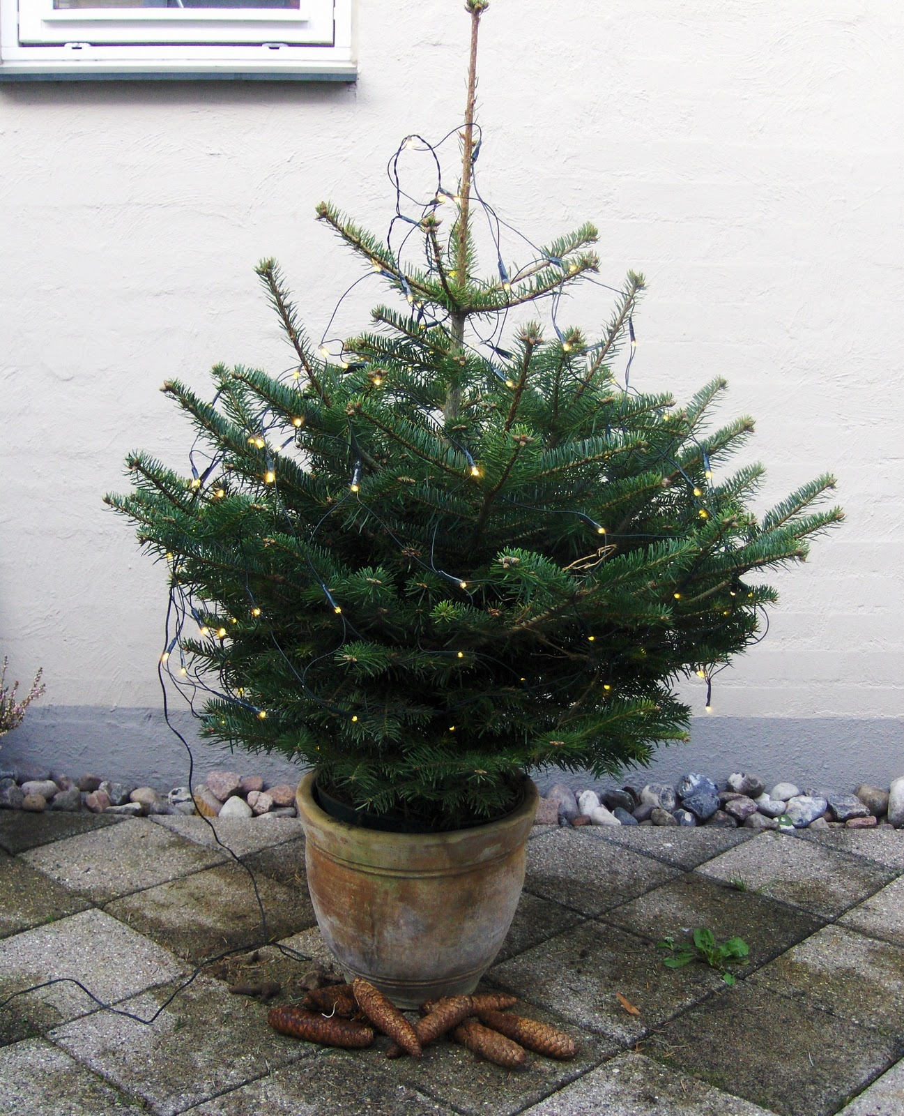 Solvejfire: mit lille juletræ