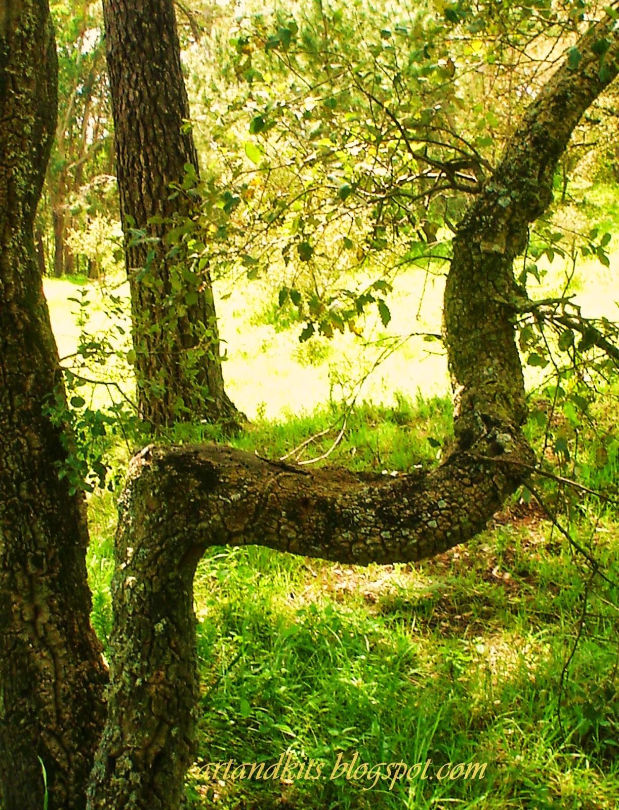 As árvores, têm uma qualidade que muito admiro: a sua verticalidade! A sua única ambição? Não o desejo de querer subir, a qualquer custo... mas o desejo de saber estar, e permanecer erguidas, dignamente... de alguma forma... até mesmo, perante as contrariedades da vida... / Trees has a quality which I much admire: its verticality! Its only ambition? Not the wish to want to climb, at any cost... but the wish to know how to be, and stand tall, with dignity... somehow... even facing the adversities of life...