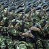 Indonesia Terus Melakukan Penambahan Militernya Ke Papua