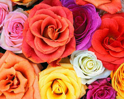 Love Roses Flowers Background Wallpaper