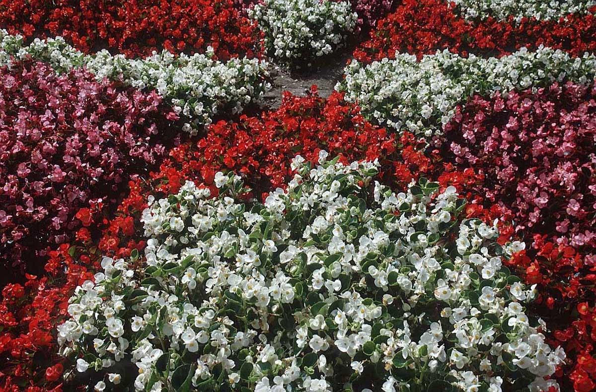 http://3.bp.blogspot.com/-h-3nsoG7o5k/TpqyJzUr9MI/AAAAAAAAAYs/1L1gHEpofds/s1600/red-white-flowers-4s4.jpg