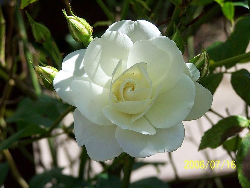 Pluck Flower