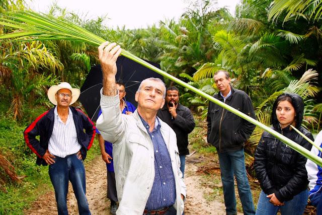 Feira reúne produtores de Palmito Pupunha no Vale do Ribeira