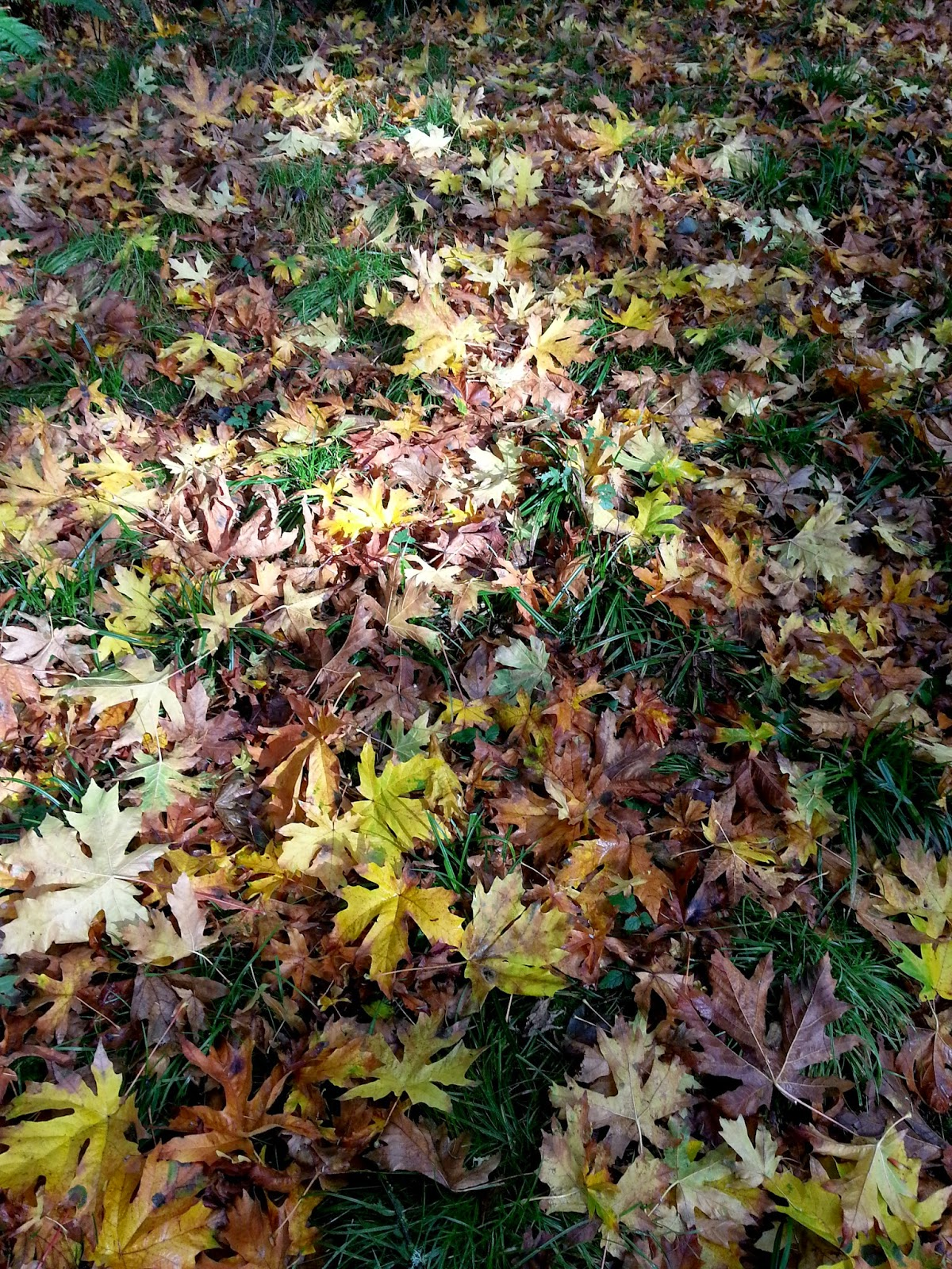Autumn leaves on the way to Robert & Kate's wedding ceremony - Patricia Stimac, Seattle Wedding Officiant
