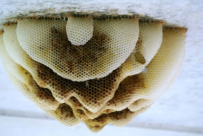 Nature walk in Royal Botanical Garden - Honeybee combs :: All Pretty Things