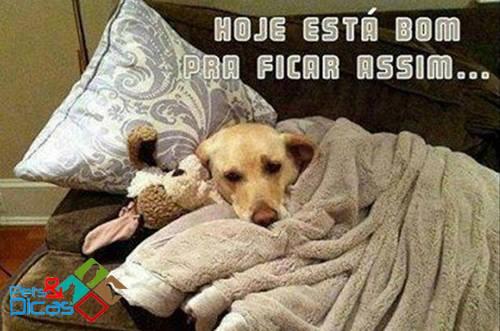 Cão na cama com cobertor