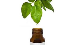Aceite de árbol de té: El increíble aceite que no debe faltar en tu casa