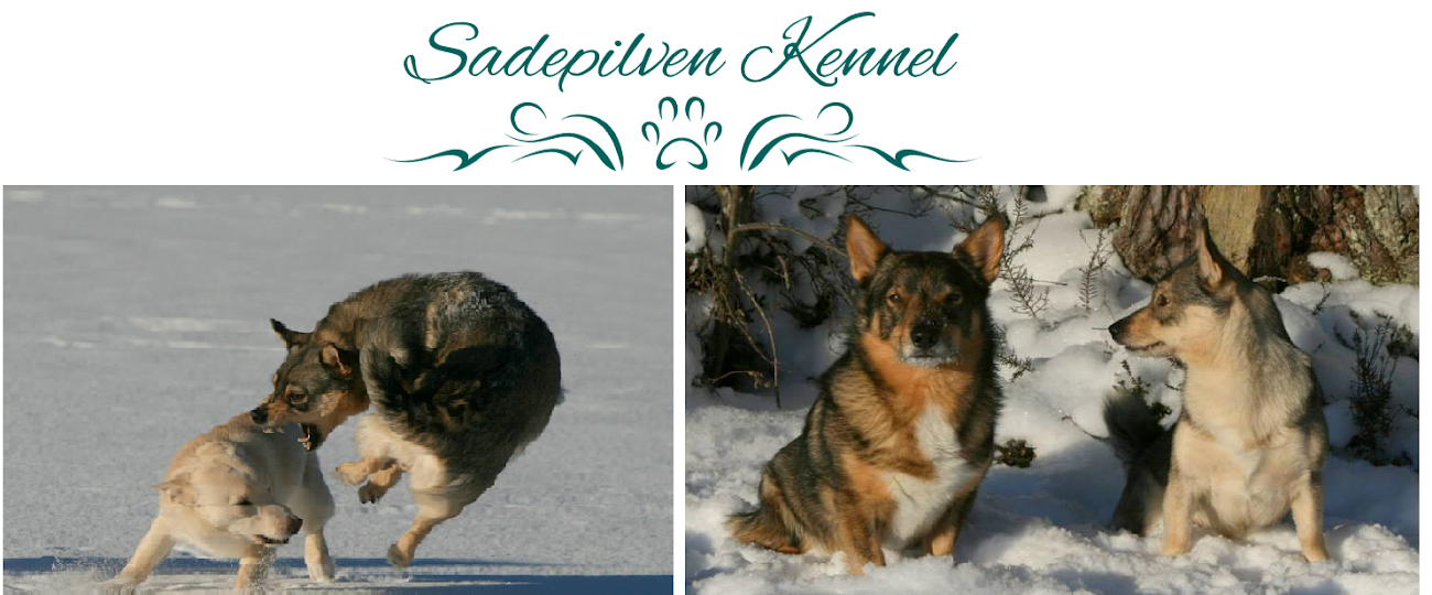 Sadepilven kennel
