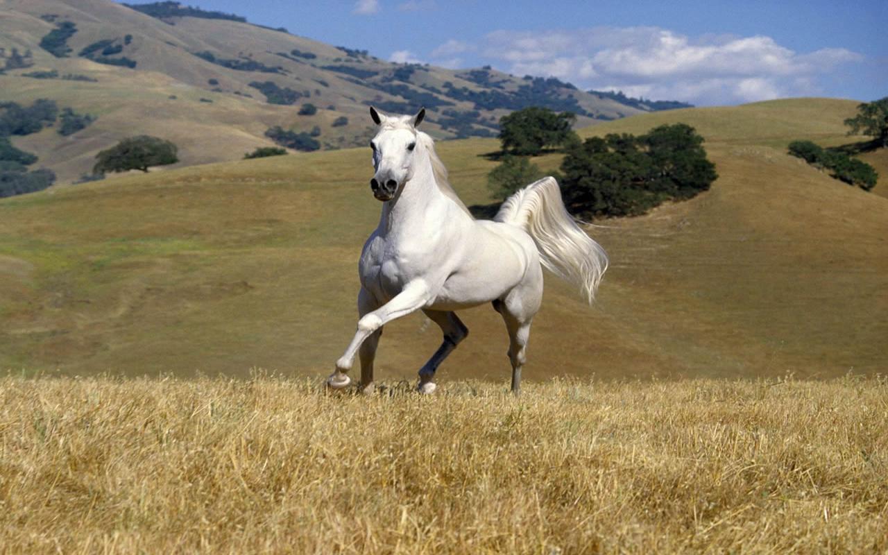 animals horse running free - photo #34