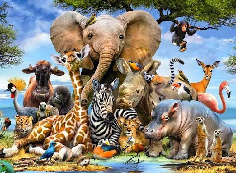 QUERIDOS ANIMALES