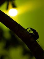 【十日町市立里山科学館「森の学校」キョロロ。「クワガタ・カブトムシ展2012」(新潟県十日町市)】