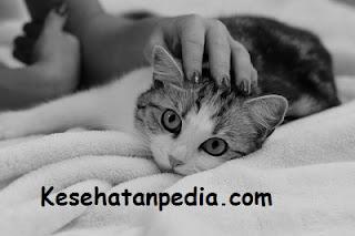 Bahaya Memegang Kucing bagi Ibu Hamil