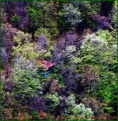 foisorul verde vedere de la crucea alba