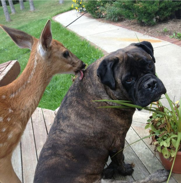 Funny animals of the week - 17 July 2015, best animal photos, animal picture gallery, funny animal