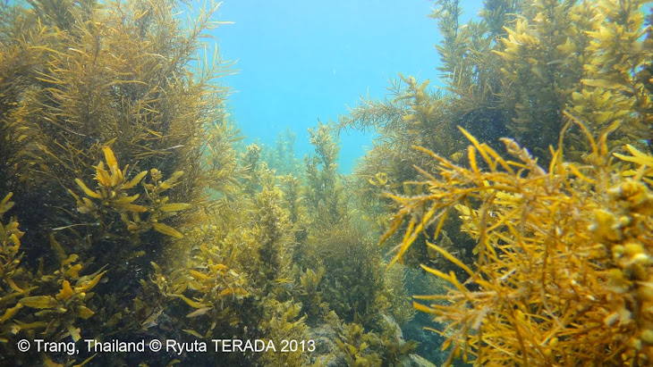 Seaweed Research Journal