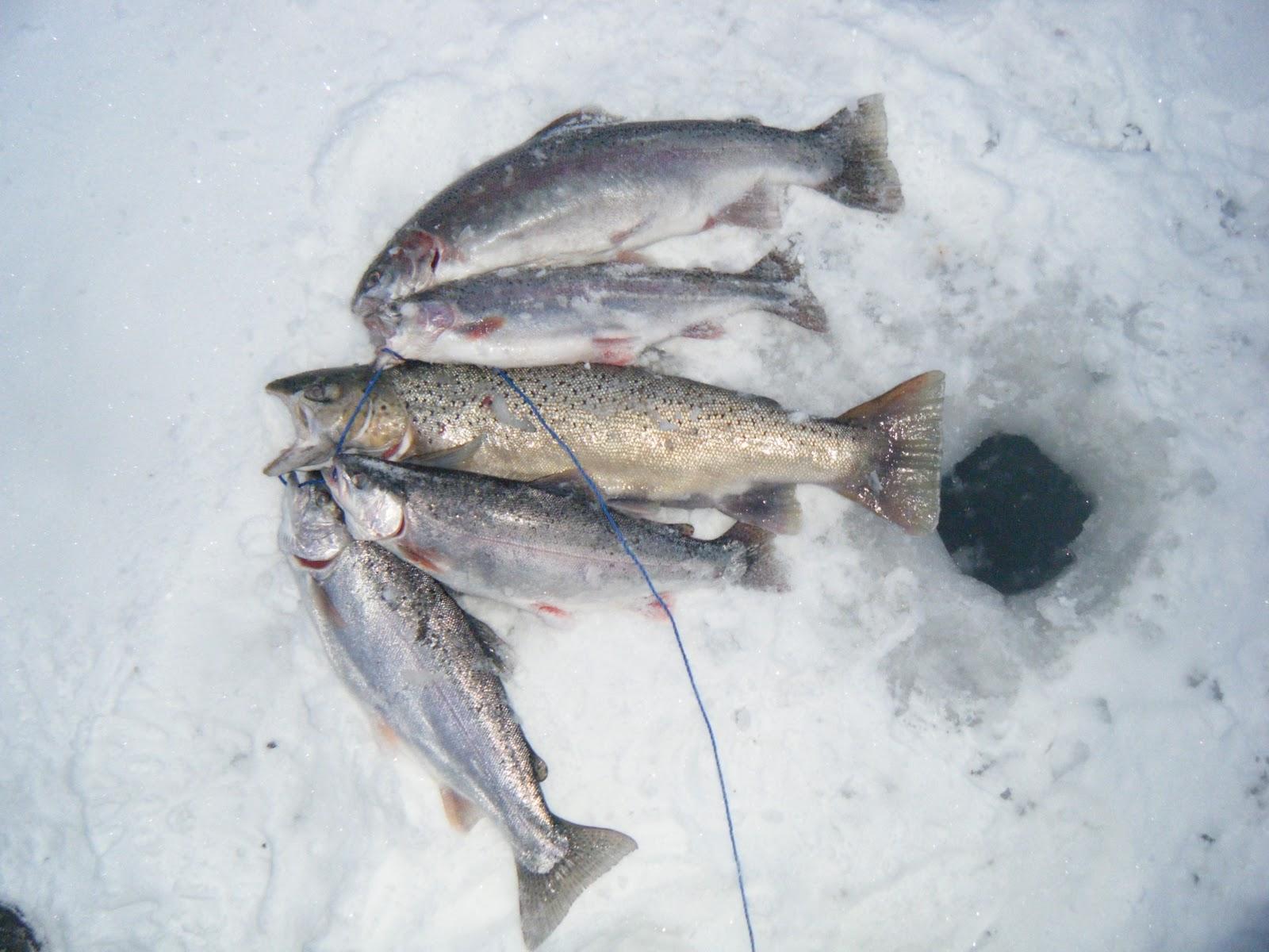 Wisconsin fishing reports 2012 sheboygan ice fishing for Wisconsin trout fishing