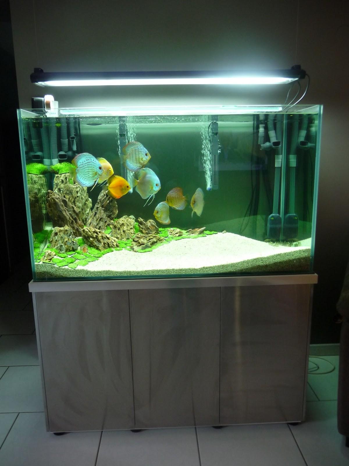 aquarium discus sur mesure fluval tech aquarium discus fluval tech. Black Bedroom Furniture Sets. Home Design Ideas