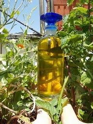 Aceite de Oliva en la Salud