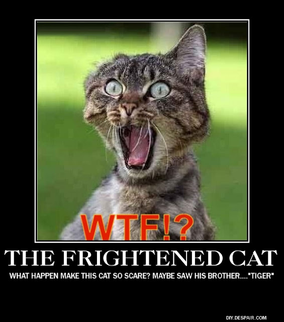 frightened cat