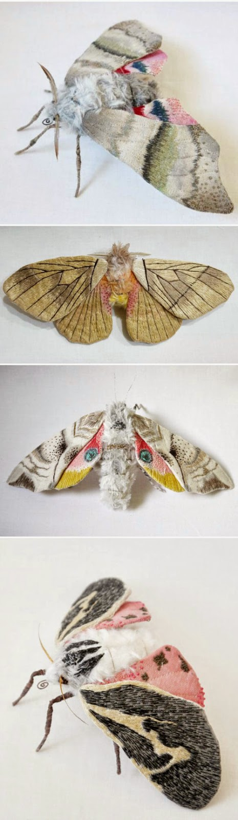 beautifully colored textile moths