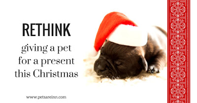 pets as presents
