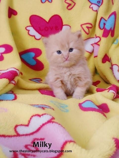 cara foto kucing