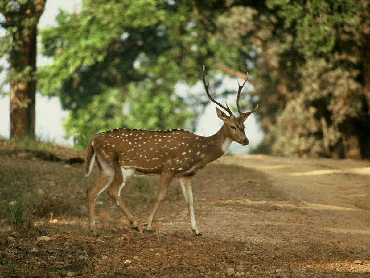 Kanha India  city images : The park is open daily from 15th of October to 30th June.