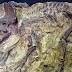 Άνοιξε η έκθεση «Πριν την άφιξη των δεινοσαύρων» του M. Ricci στο Β.Β.Ε.Μ.