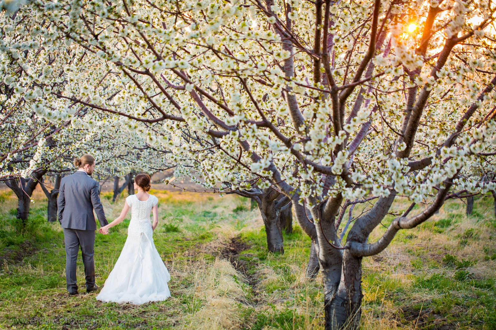 Logan Utah Photographers, Wedding Photography, Weddings, Bridals, Spring, Orchard, Blossoms, Couple, Wedding Dress, Logan Utah, Endless Photography