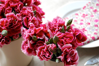 red carnations flowers pictures