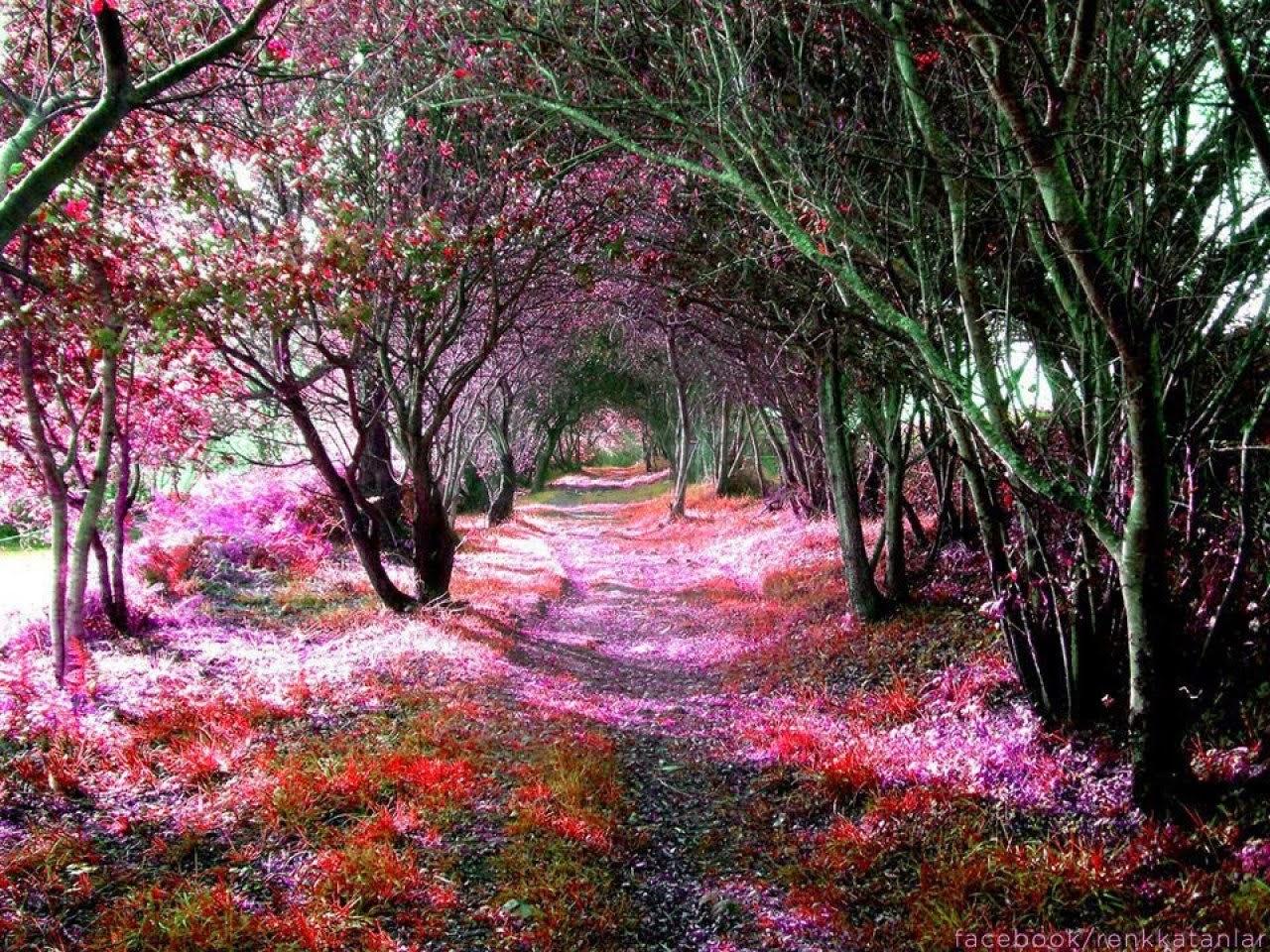 Beautiful Osaka Castle Nishinomaru Garden Cherry Blossom Viewing Beautiful Places