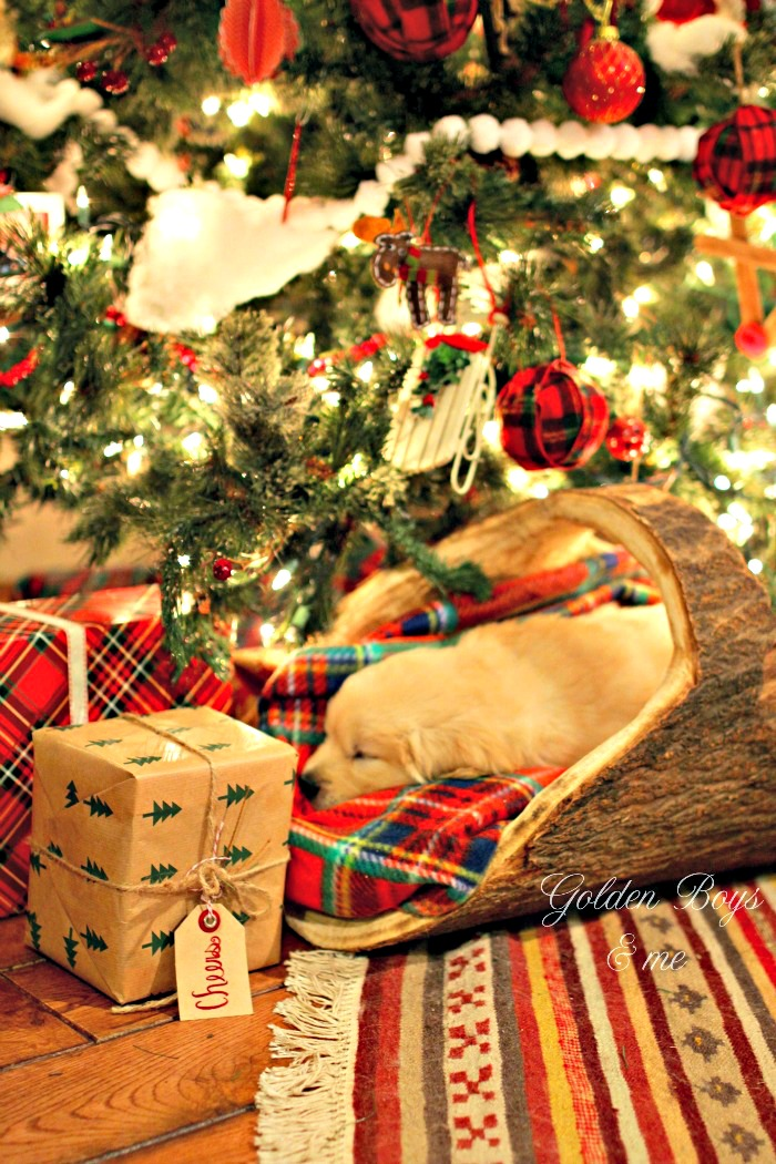 Golden Retriever puppy sleeping in log basket under Christmas tree - www.goldenboysandme.com