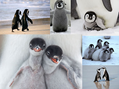 Cute Penguin Montage