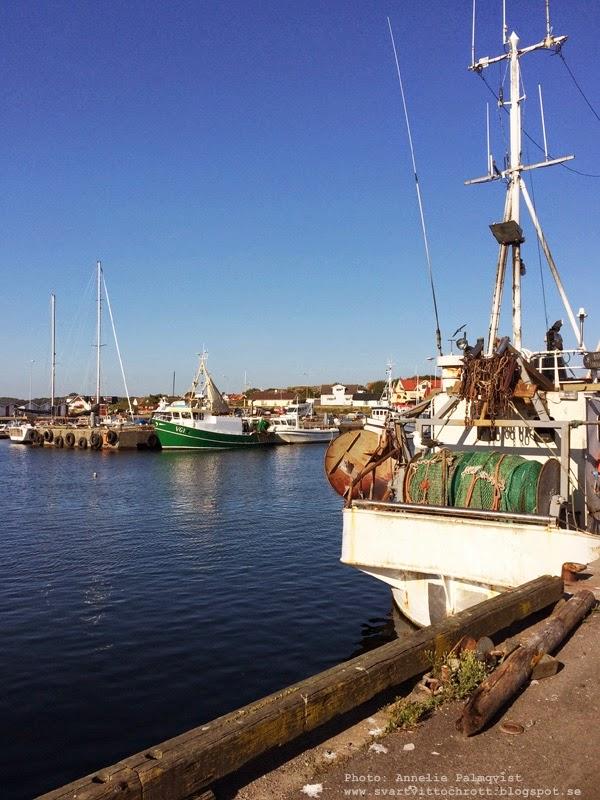 träslövsläge, läjet, varberg, tips, hamn, hamnar, hamnen, läjets hamn, trslövsläges hamn, varv, varvet, båt, båtar, fiske, fiskebåtar, fiskebåtarna