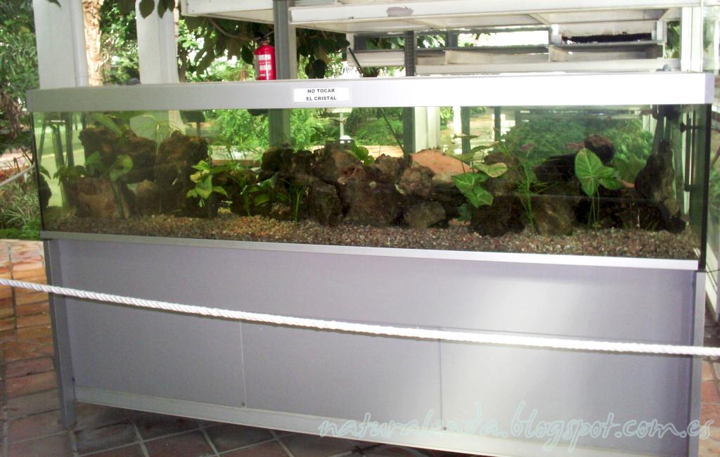 acuario invernadero tropical