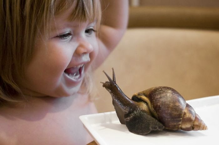 Absolutely Bizarre Friendship between A Little Girl and Snails Family