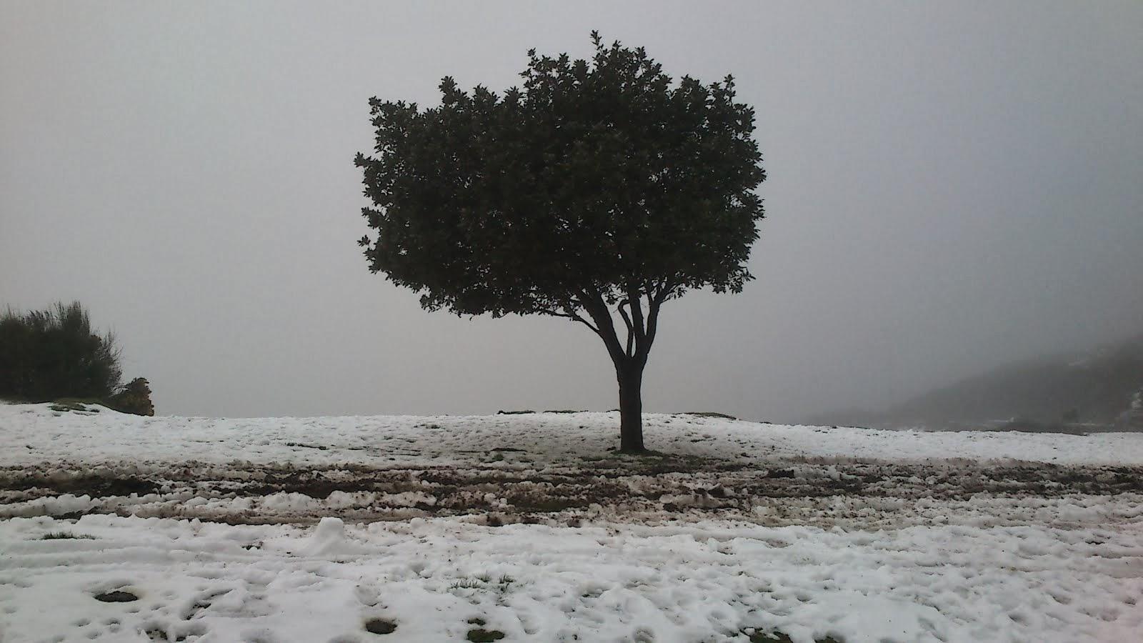 Imagens de neve