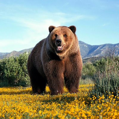 Amazing grizzly bear download free wallpapers for Apple iPad
