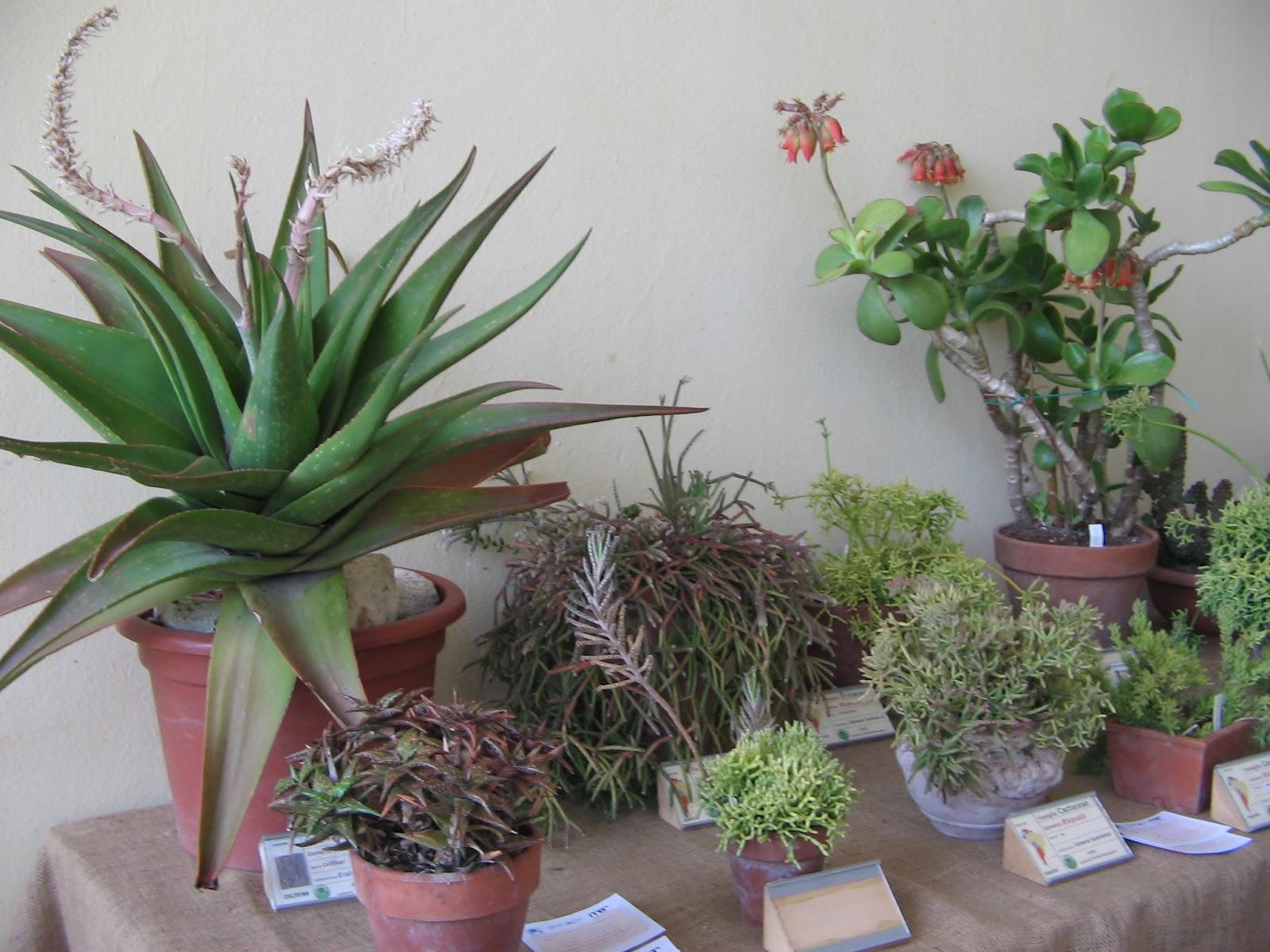 Living ravenna visita alla mostra di piante grasse al mar for Piante rare
