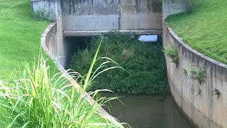 Moradores temem entupimento das pontes