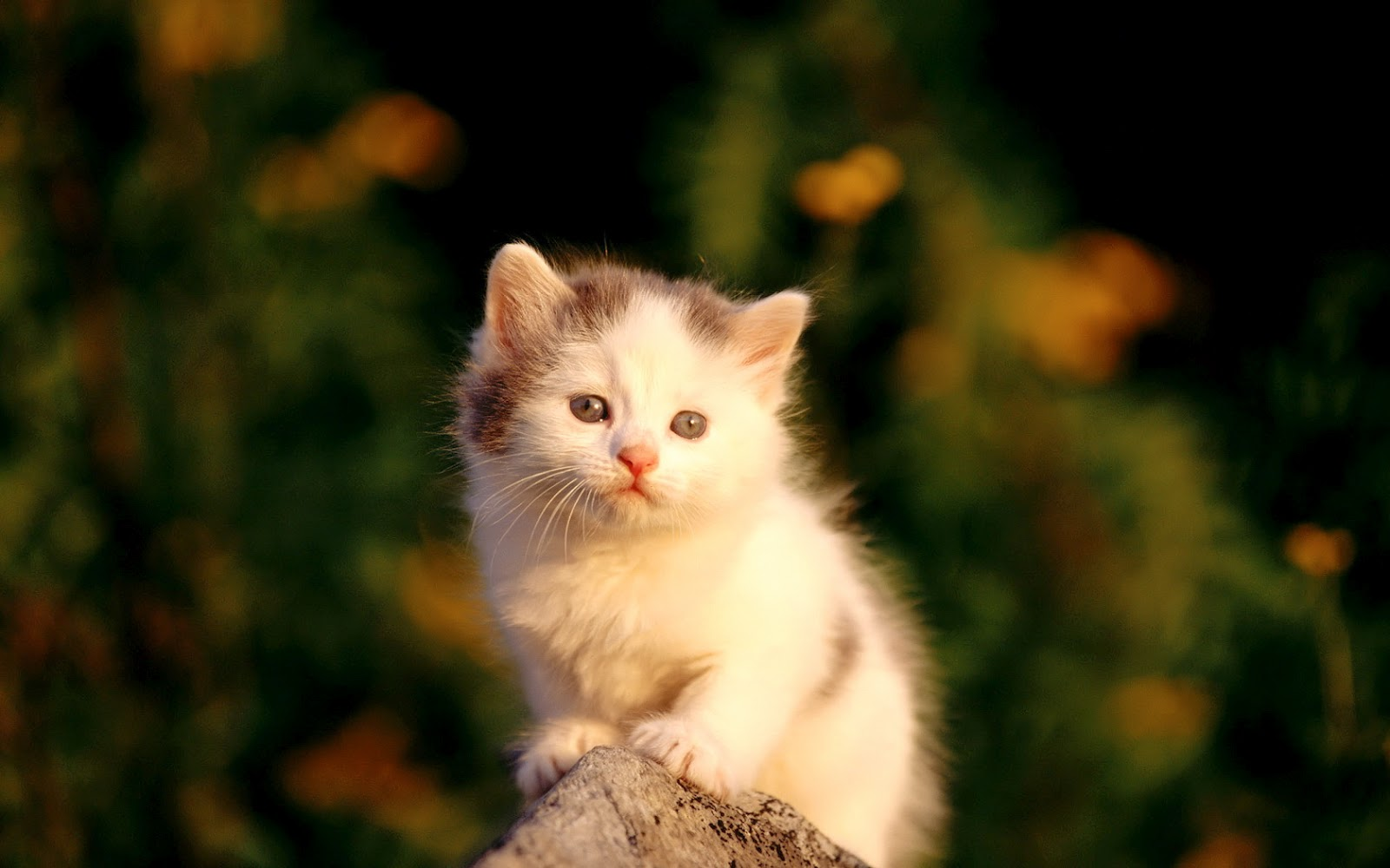 Most interseting cutest cat wallpapers - Baby kitten backgrounds ...