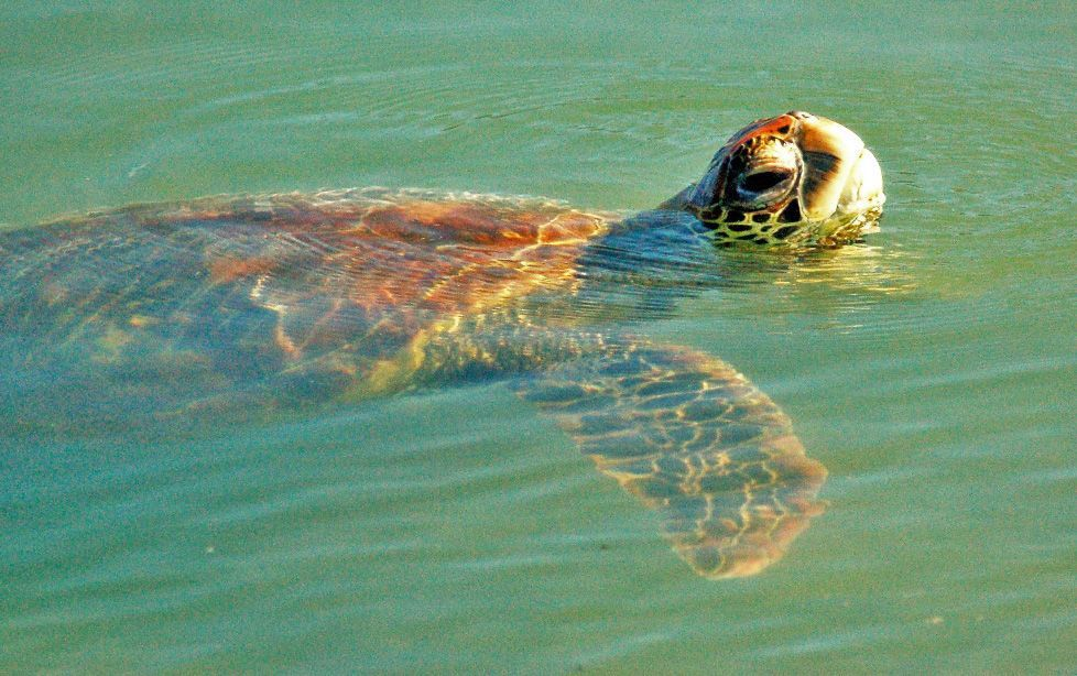 Santa Cruz Island Black Turtle Cove Gal Pagos Eco