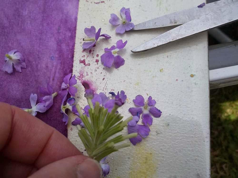 how to keep cut flowers progress