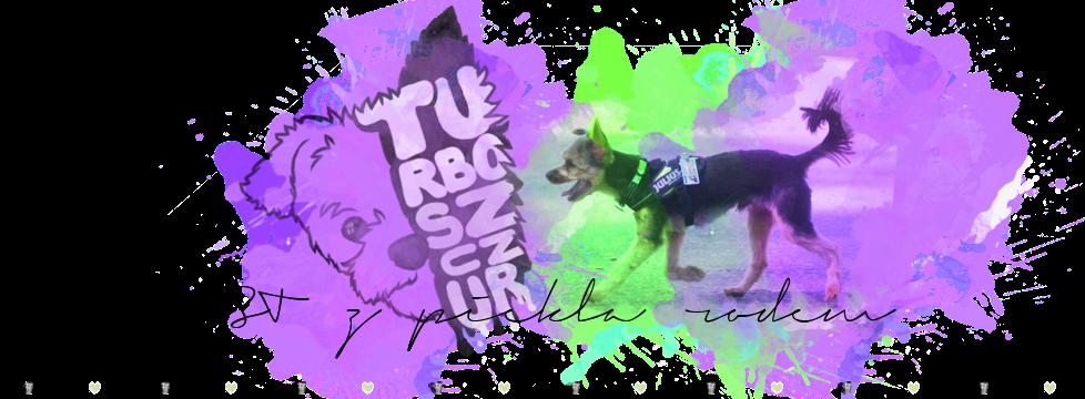 Yorkshire Terrier z Piekła Rodem