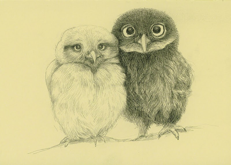 owls - yara dutra